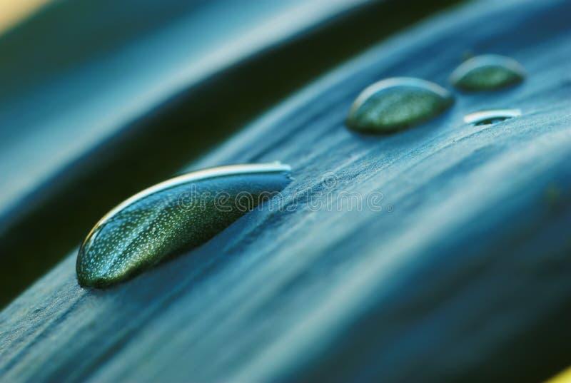 Πτώσεις νερού στο φύλλο στοκ εικόνες με δικαίωμα ελεύθερης χρήσης