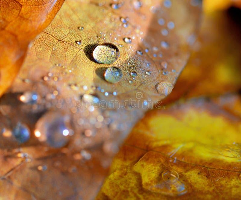 Πτώσεις στο κίτρινο φύλλο το φθινόπωρο στοκ εικόνα