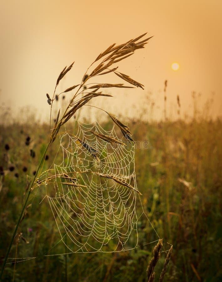 Πτώσεις της δροσιάς πρωινού σε έναν Ιστό στοκ φωτογραφία