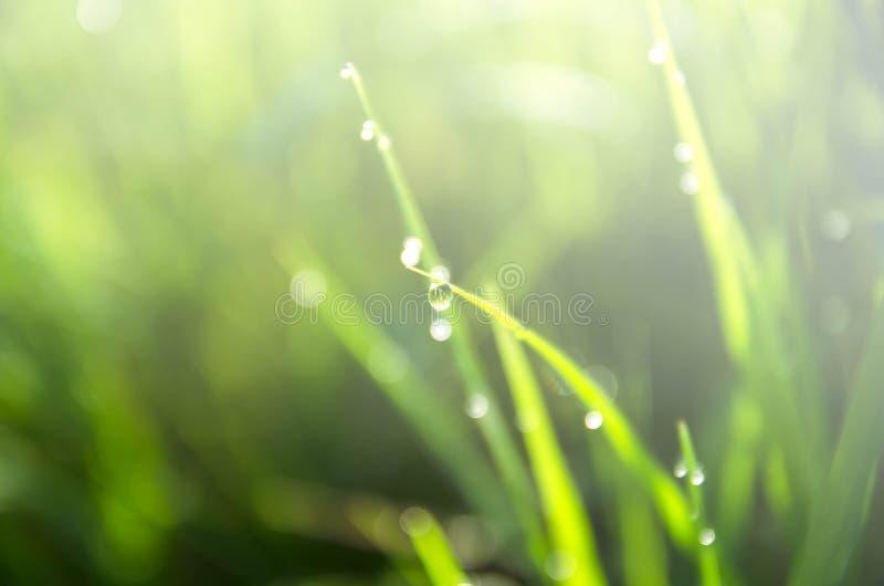 Πτώσεις της δροσιάς στη χλόη με το φίλτρο χρώματος στοκ φωτογραφία με δικαίωμα ελεύθερης χρήσης