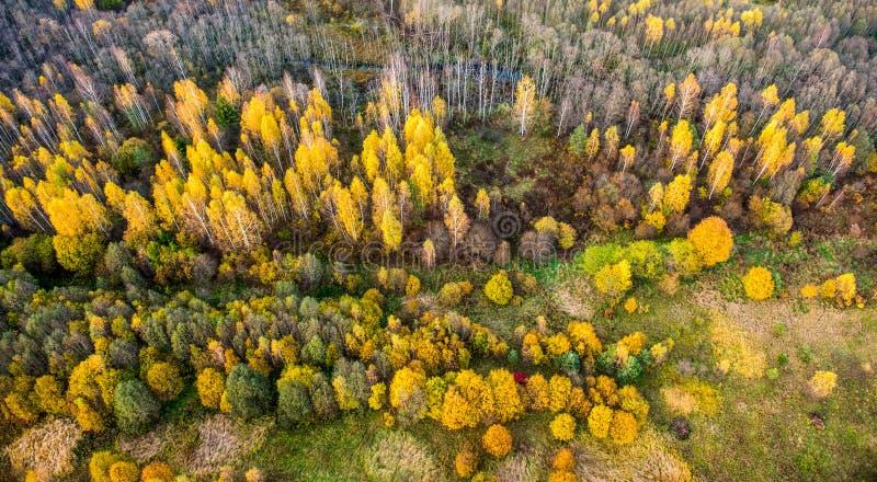 Πτώση δασική Λιθουανία στοκ εικόνα με δικαίωμα ελεύθερης χρήσης