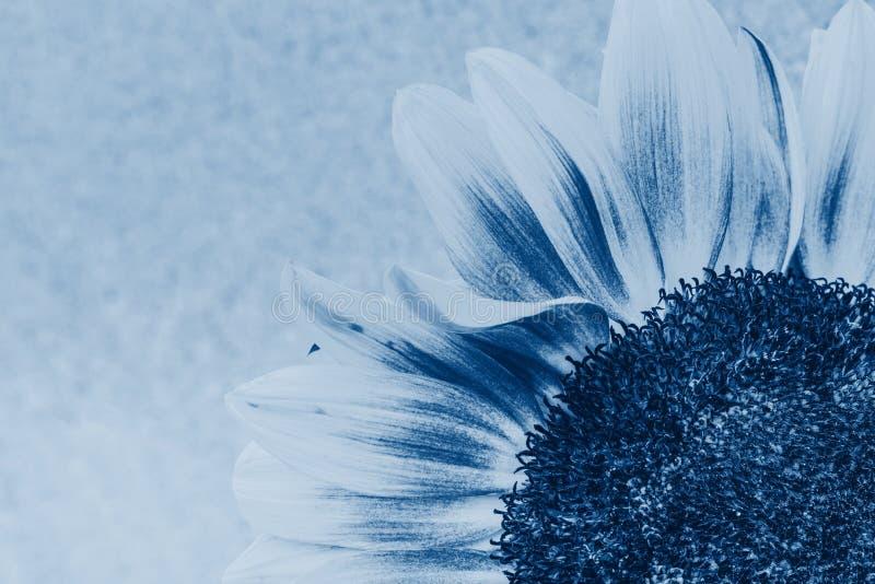 Πτώση μακροεντολής στο πέταλο του ηλιοτρόπιου στοκ φωτογραφίες με δικαίωμα ελεύθερης χρήσης