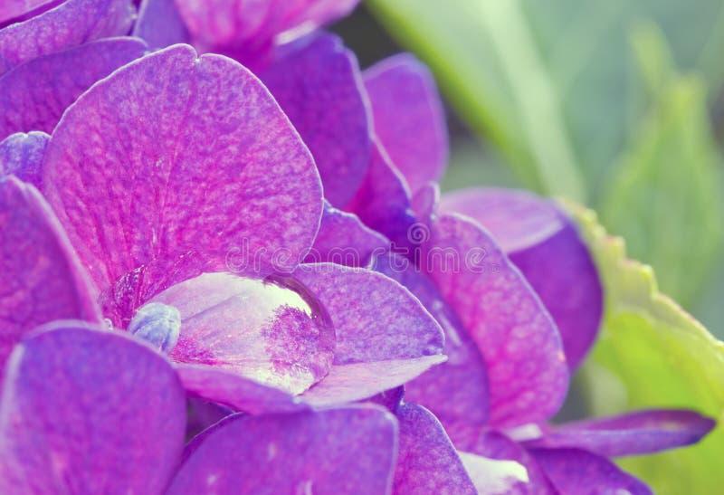 Πτώση νερού σε ένα λουλούδι στοκ φωτογραφία με δικαίωμα ελεύθερης χρήσης