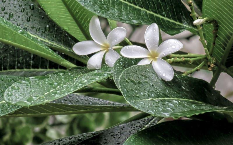 Πτώση νερού στα λουλούδια στοκ εικόνα με δικαίωμα ελεύθερης χρήσης