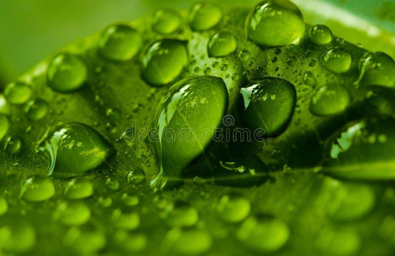 Πτώση νερού στο πράσινο φύλλο στοκ εικόνες