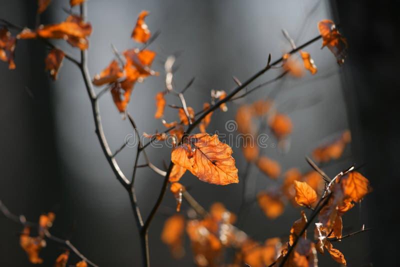 Download πτώση ομορφιάς στοκ εικόνα. εικόνα από alon, χειμώνας - 2231951