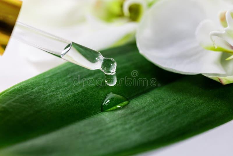 Πτώση ουσιαστικού πετρελαίου που αφορά το πράσινο φύλλο από dropper γυαλιού στοκ εικόνες