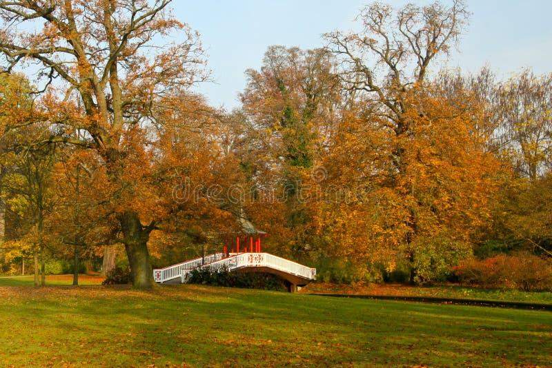 Πτώση σε ένα πάρκο στοκ φωτογραφία με δικαίωμα ελεύθερης χρήσης
