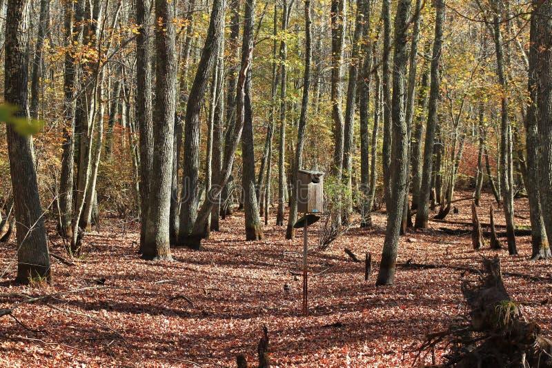 Πτώση στο δάσος στοκ εικόνα