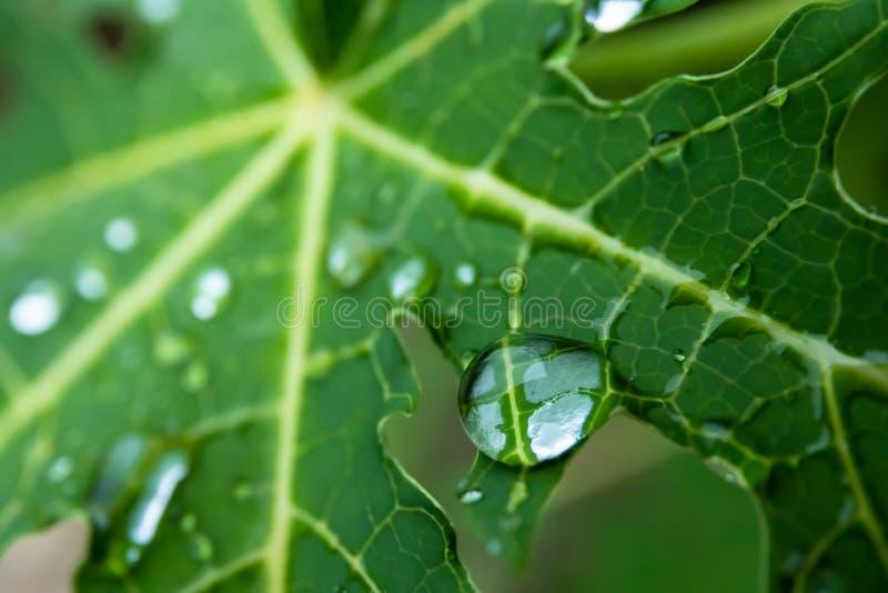 Πτώση στο πράσινο φύλλο στοκ εικόνα