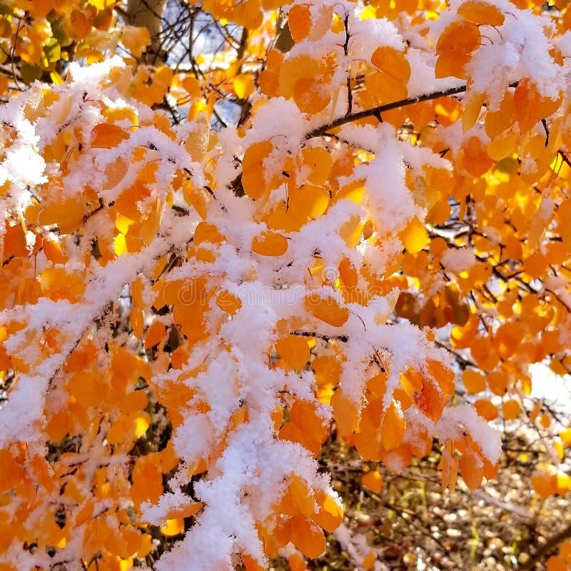 Πτώση στο πρώτο χιόνι στοκ φωτογραφίες με δικαίωμα ελεύθερης χρήσης