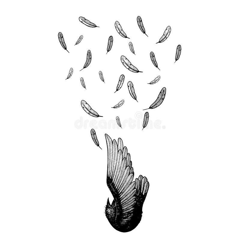 Πτώση τέχνης γραμμών πουλιών κάτω απομονωμένη σκιαγραφία διάνυσμα απεικόνισης Τέχνη γραμμών φτερών κύβος πουλιών από τον ουρανό ε απεικόνιση αποθεμάτων