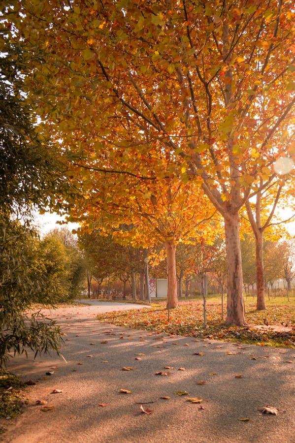πτώση τα δέντρα φθινοπώρου χρωματίζουν 2 στοκ φωτογραφία
