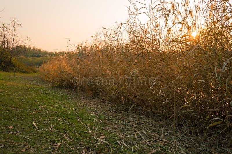 πτώση Τοπίο φθινοπώρου στο ηλιοβασίλεμα στοκ φωτογραφίες