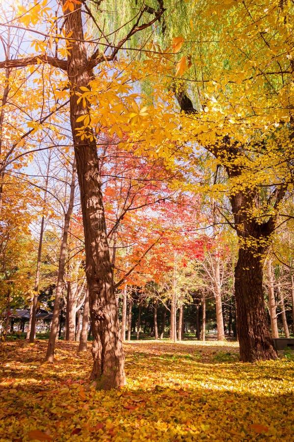 πτώση autumnal forest στοκ φωτογραφίες