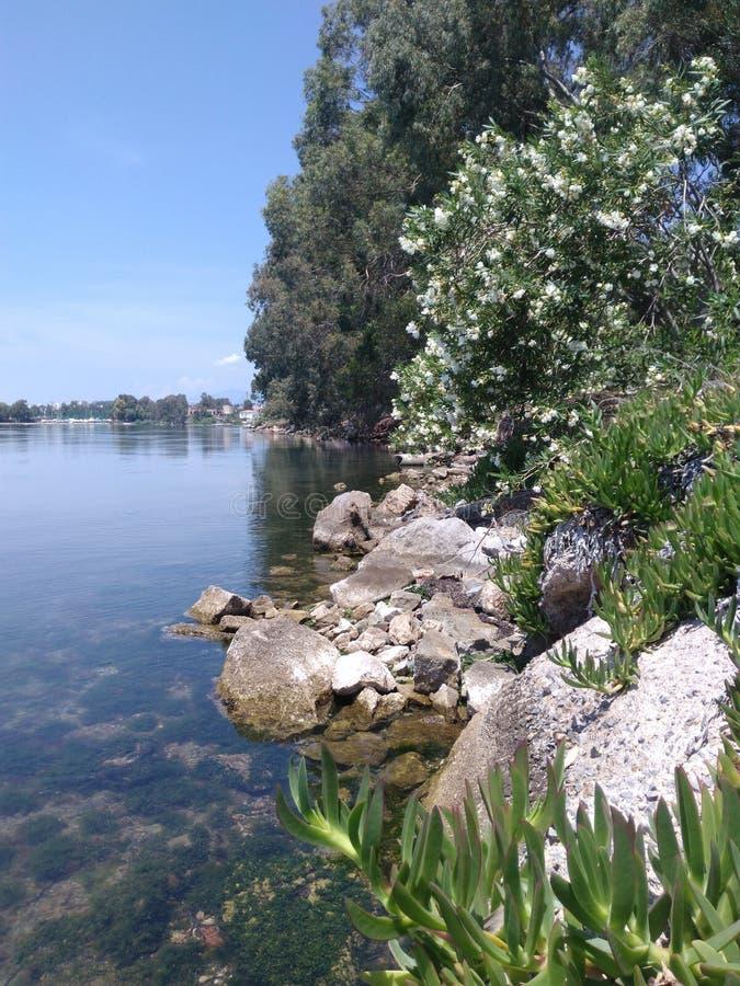 Πυκνή βλάστηση στην ακτή στοκ εικόνες
