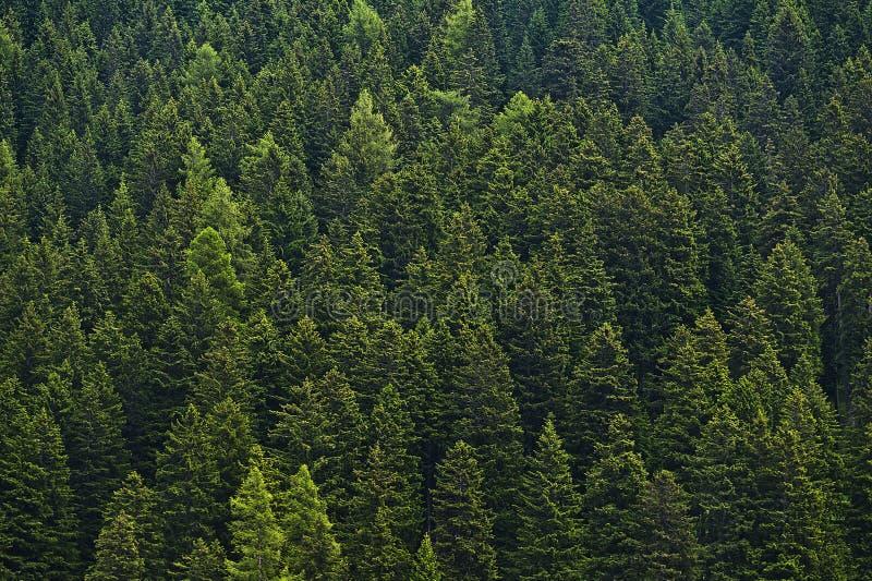 Πυκνό δάσος στοκ εικόνες