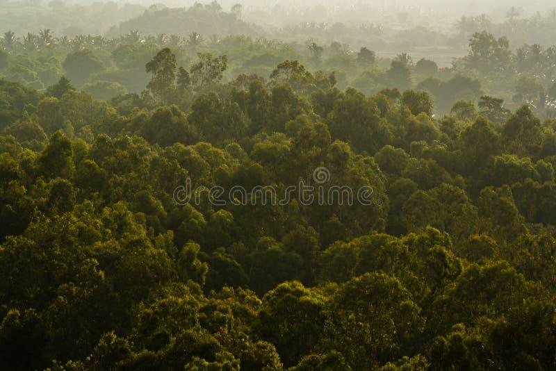 πυκνό δάσος στοκ εικόνες με δικαίωμα ελεύθερης χρήσης