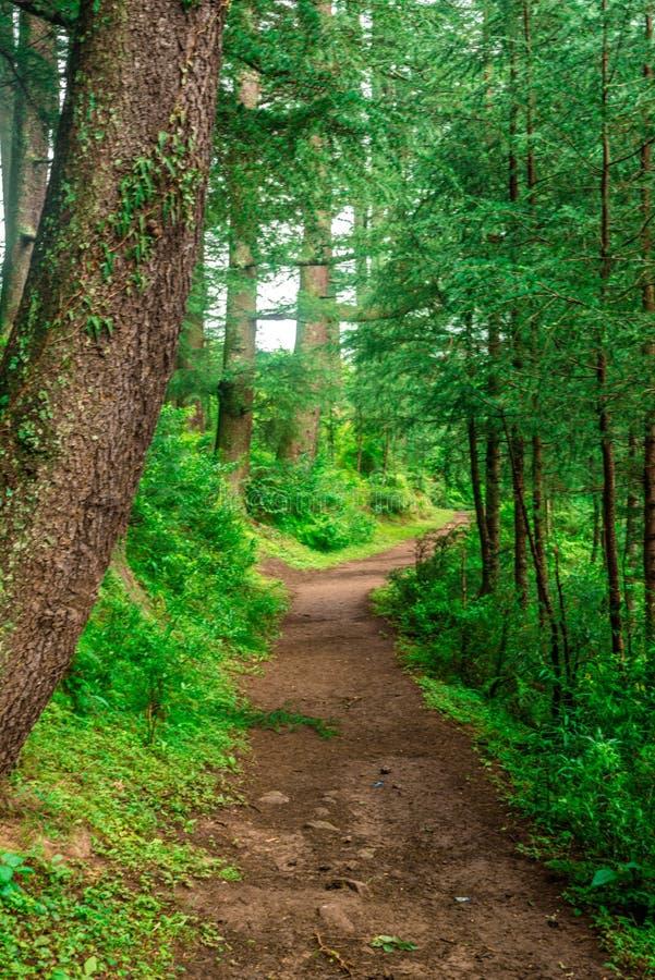 πυκνό τροπικό οδοιπορικό ζουγκλών και τροπικό δάσος στα Ιμαλάια, κοιλάδα Sainj, Himachal Pradesh, Ινδία στοκ φωτογραφία με δικαίωμα ελεύθερης χρήσης