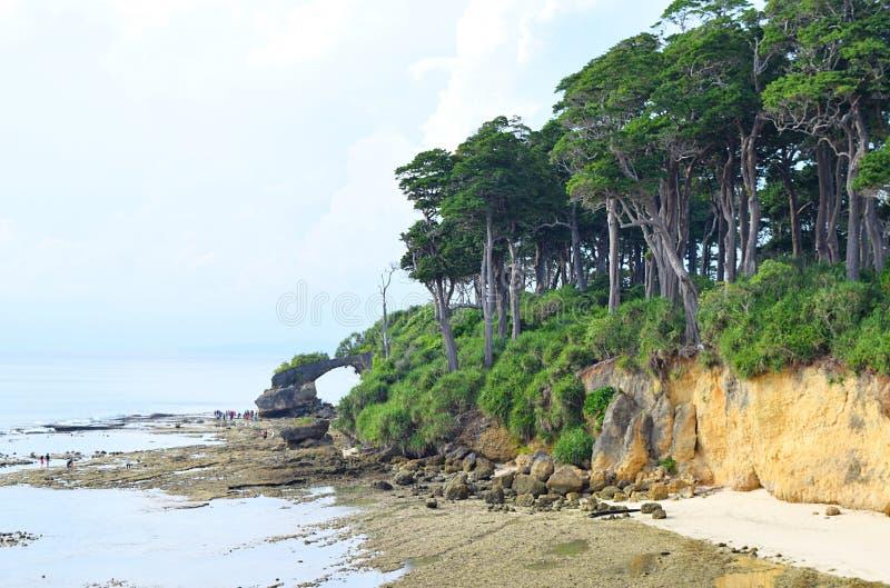 Πυκνό τροπικό παράκτιο πράσινο δάσος με την ψηλή εν πλω ακτή δέντρων Manilkara Littoralis - νησιά Andaman Nicobar, Ινδία στοκ φωτογραφία με δικαίωμα ελεύθερης χρήσης