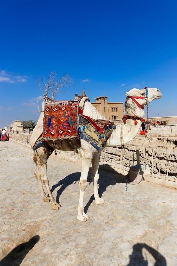πυραμίδα giza της Αιγύπτου κ&alph στοκ εικόνα με δικαίωμα ελεύθερης χρήσης