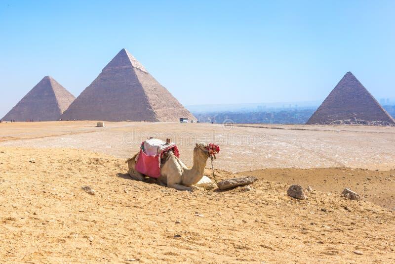 πυραμίδες giza της Αιγύπτου στοκ εικόνα