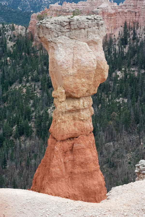 Πυραμίδα Stone Hoodoo στο εθνικό πάρκο Γιούτα ΗΠΑ φαραγγιών του Bryce στοκ εικόνες