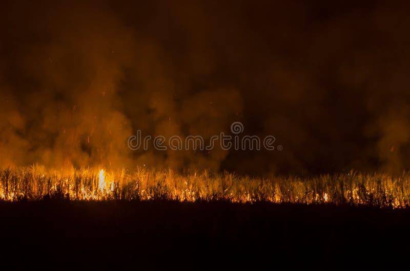Πυρκαγιά στα δέντρα ζαχαροκάλαμων στον κήπο στοκ φωτογραφία με δικαίωμα ελεύθερης χρήσης