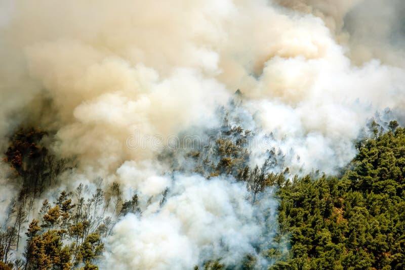 Πυρκαγιά στις δασικές περιοχές στη Βοιωτία στην κεντρική Ελλάδα στοκ φωτογραφίες με δικαίωμα ελεύθερης χρήσης