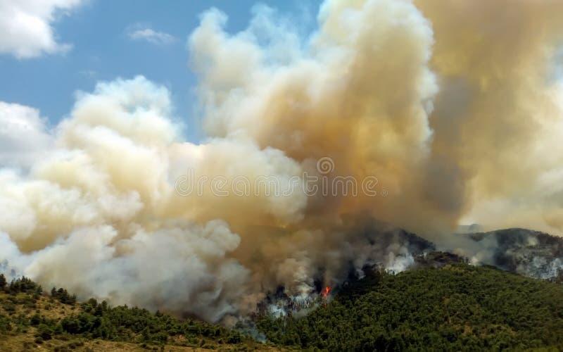 Πυρκαγιά στις δασικές περιοχές στη Βοιωτία στην κεντρική Ελλάδα στοκ εικόνες