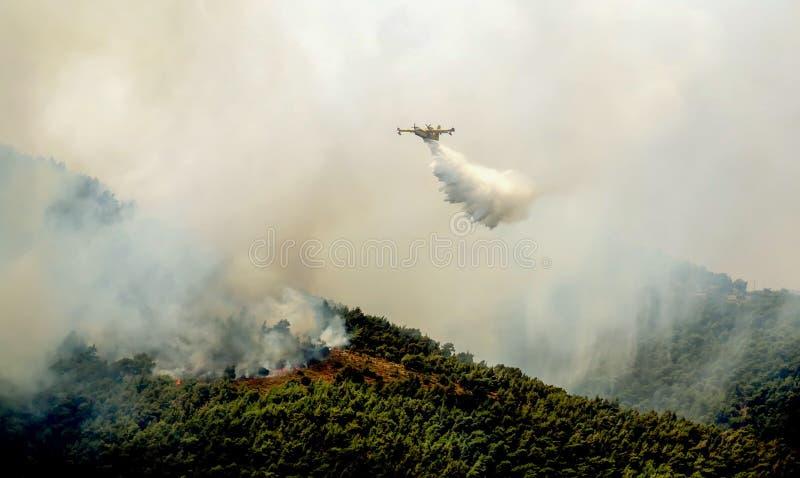Πυρκαγιά στις δασικές περιοχές στη Βοιωτία στην κεντρική Ελλάδα στοκ φωτογραφία