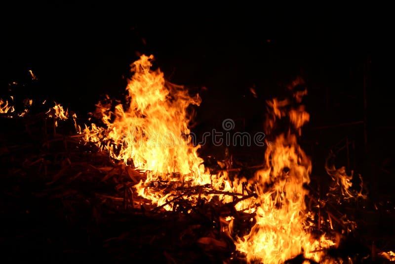 Πυρκαγιά στον τομέα για τα σιτάρια Crap εγκαυμάτων στοκ εικόνες