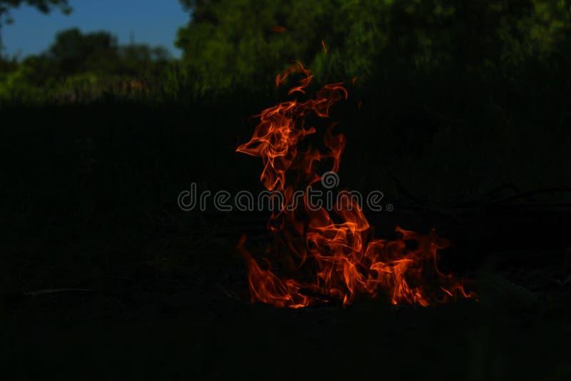 πυρκαγιά τη νύχτα για τη σχάρα στα ξύλα στοκ εικόνα με δικαίωμα ελεύθερης χρήσης