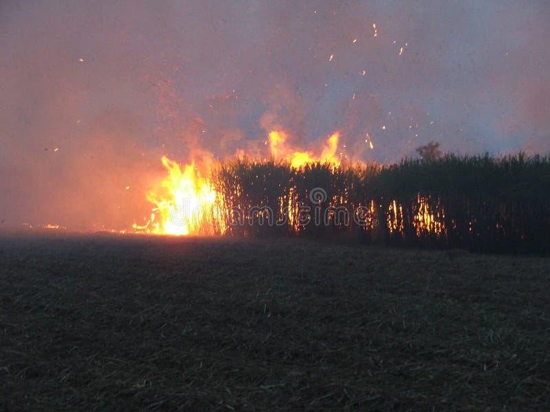 πυρκαγιά 2 θάμνων στοκ εικόνα με δικαίωμα ελεύθερης χρήσης