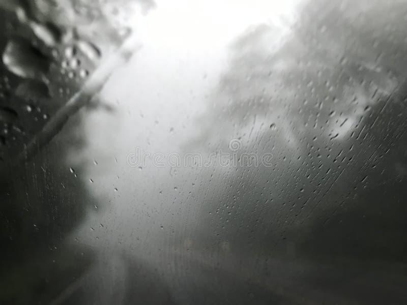 Πυροβοληθείς από τον ανεμοφράκτη car's της βροχής και της ομίχλης στη μέση του δάσους πεύκων στοκ φωτογραφίες με δικαίωμα ελεύθερης χρήσης