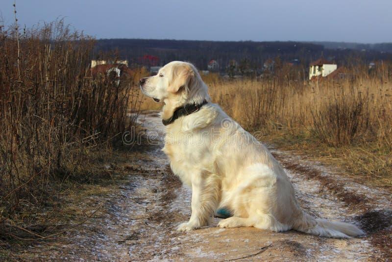 Πυροβοληθείς ενός σκυλιού σκυλί υπαίθριο στοκ φωτογραφίες