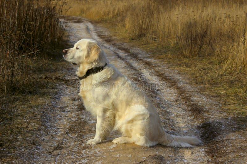 Πυροβοληθείς ενός σκυλιού σκυλί υπαίθριο στοκ φωτογραφίες με δικαίωμα ελεύθερης χρήσης