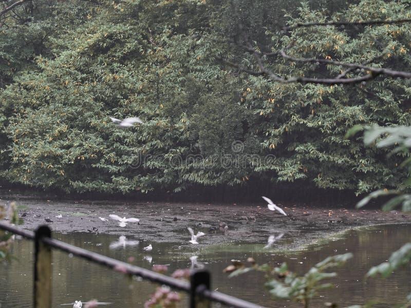Πυροβοληθείς μιας ομάδας πουλιών στοκ φωτογραφία με δικαίωμα ελεύθερης χρήσης