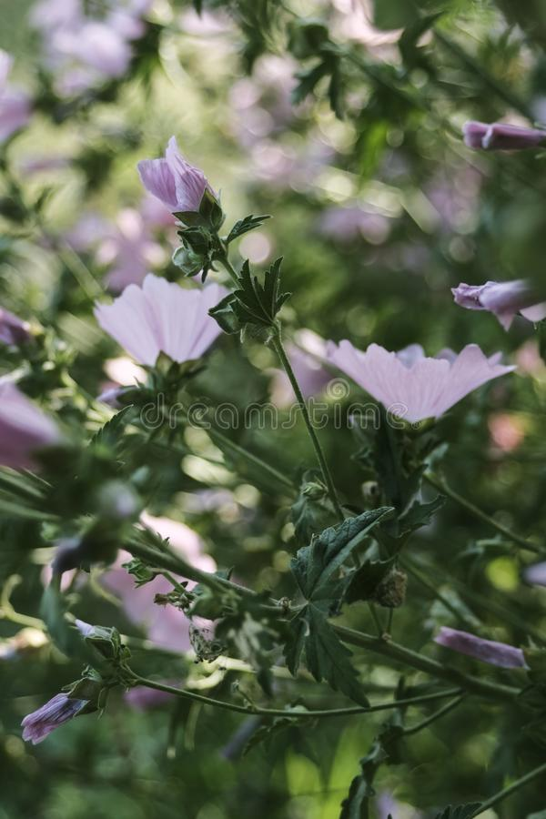 Πυροβολισμός κινηματογραφήσεων σε πρώτο πλάνο του όμορφου άσπρου κλάδου λουλουδιών με ένα θολωμένο φυσικό υπόβαθρο στοκ φωτογραφία με δικαίωμα ελεύθερης χρήσης