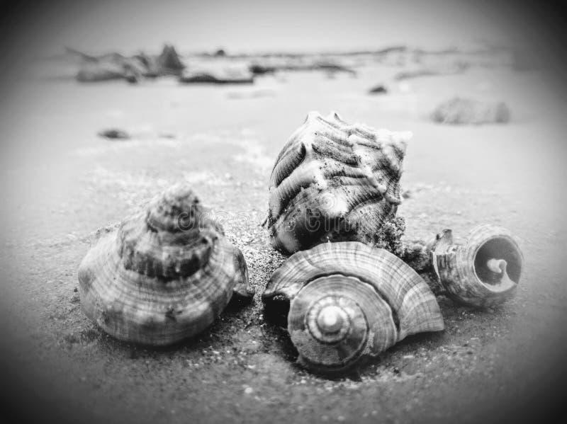 Πωλεί τα θαλασσινά κοχύλια στοκ φωτογραφία με δικαίωμα ελεύθερης χρήσης