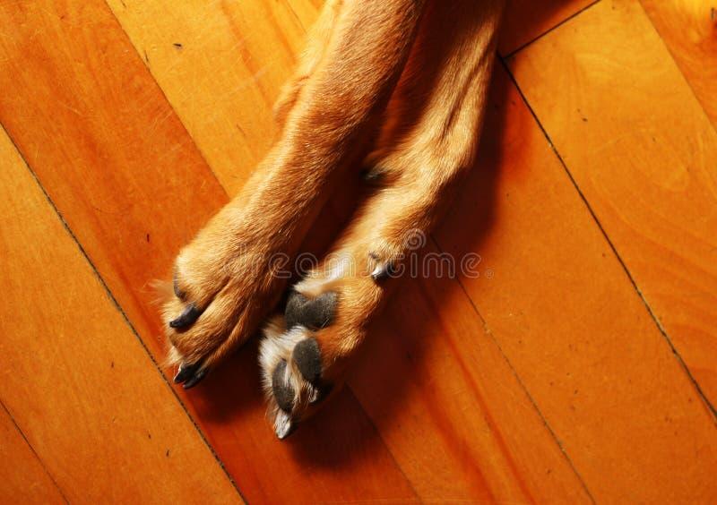 Download πόδια στοκ εικόνες. εικόνα από κλείστε, πάτωμα, πόδι, δάσος - 392208