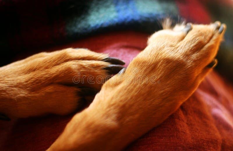 Download πόδια στοκ εικόνες. εικόνα από πόδι, κουτάβι, πόδια, λεπτομέρεια - 392210
