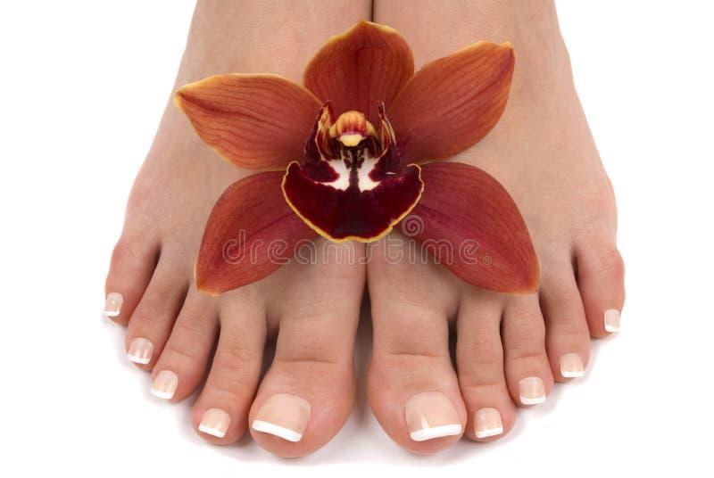 πόδια orchid στοκ φωτογραφία με δικαίωμα ελεύθερης χρήσης