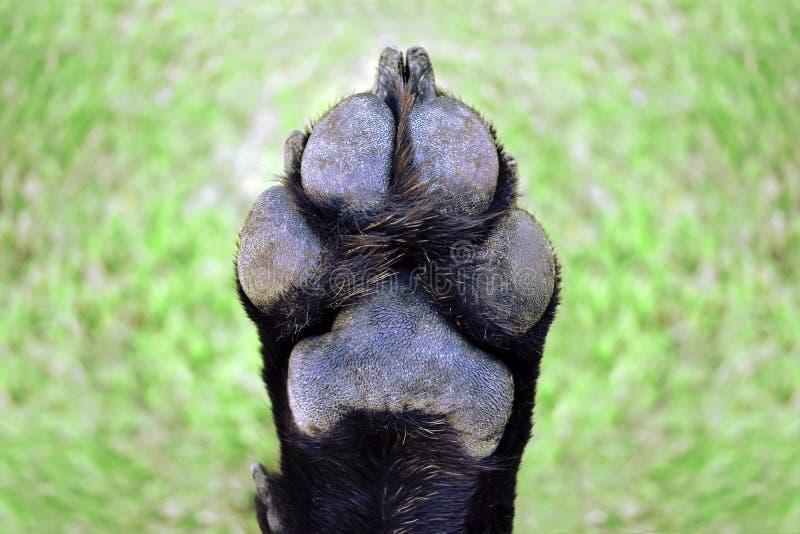 Πόδι σκυλιών στοκ εικόνες