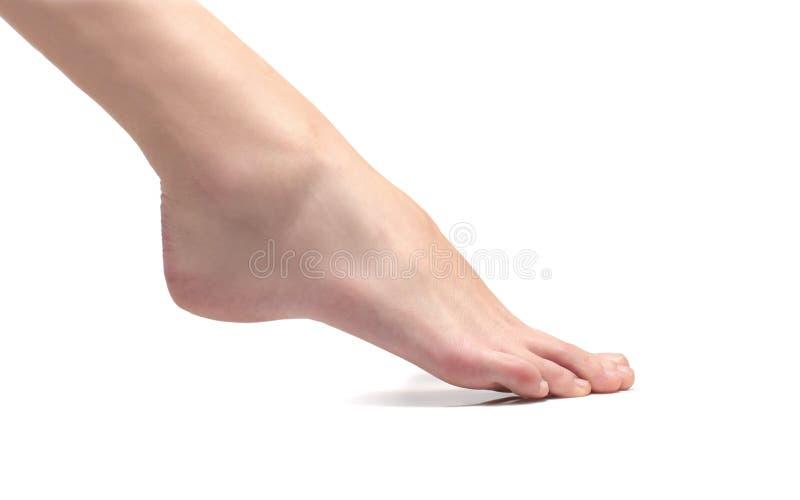 πόδι στοκ εικόνες με δικαίωμα ελεύθερης χρήσης