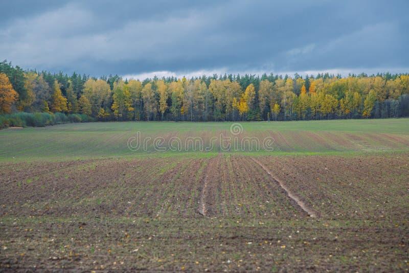Πόλη Βαλμίρα, Δημοκρατία της Λετονίας Λιβάδι το φθινόπωρο, δέντρα Φωτογραφία ταξιδιού 12 okt 2019 στοκ εικόνα με δικαίωμα ελεύθερης χρήσης