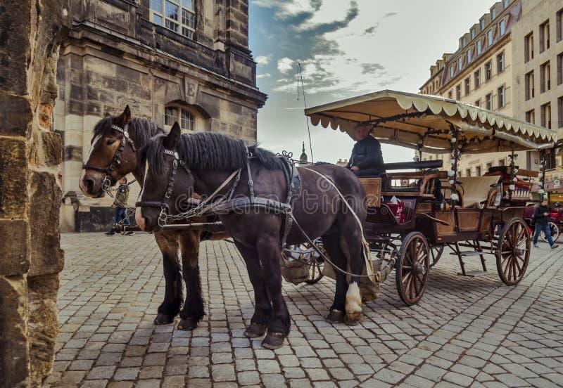 Πόλη Δρέσδη Γερμανία Σαξωνία Ένα ζευγάρι των αλόγων εκμεταλλεύτηκε σε ένα κάρρο στοκ εικόνες