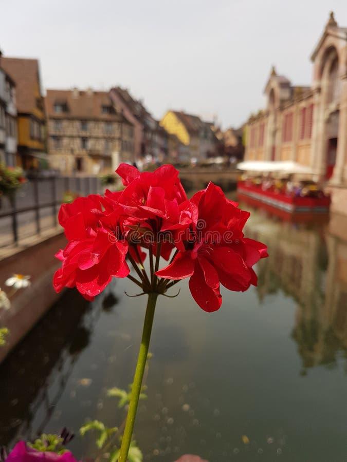 Πόλη της Colmar στην Αλσατία Γαλλία στοκ εικόνα