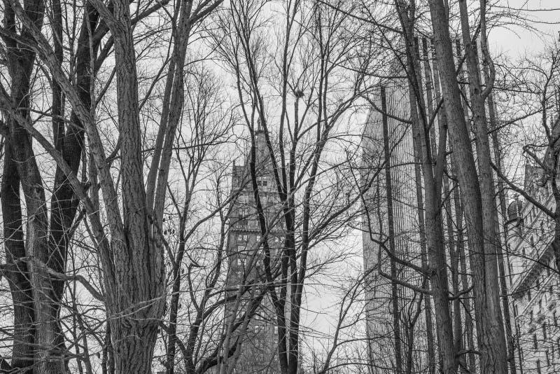 Πόλη Central Park 3 της Νέας Υόρκης στοκ φωτογραφία με δικαίωμα ελεύθερης χρήσης