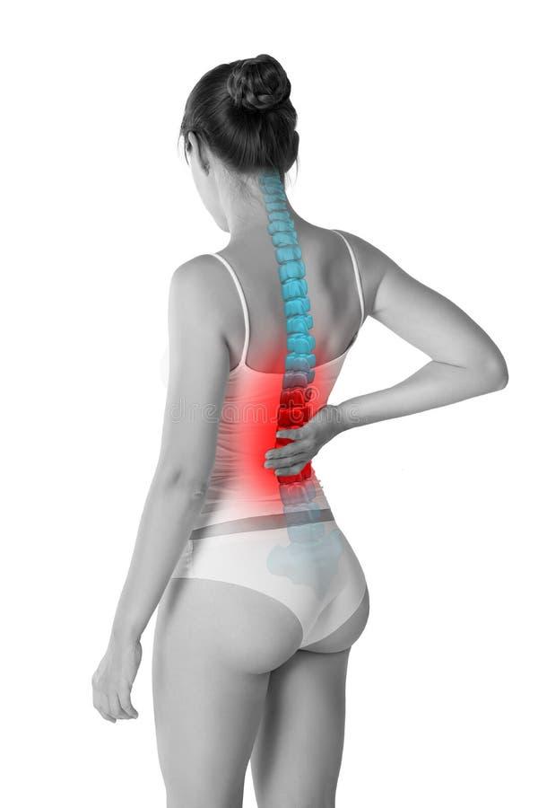 Πόνος στη σπονδυλική στήλη, μια γυναίκα με τον πόνο στην πλάτη, ζημία στην ανθρώπινη πλάτη, chiropractic έννοια επεξεργασιών που  στοκ εικόνα με δικαίωμα ελεύθερης χρήσης